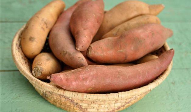 batata-yacon carol birk
